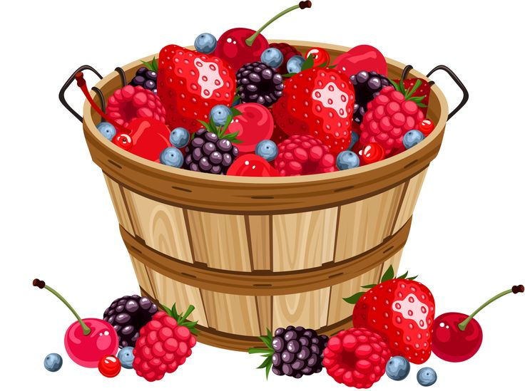 best clip art. Blueberries clipart blueberry basket