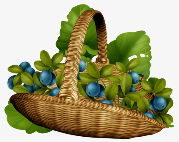 Blueberry clipart blueberry basket. Fruit png image and