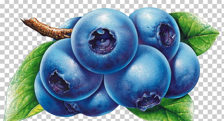 Blueberries clipart blueberry bush. Bilberry drawing png berry