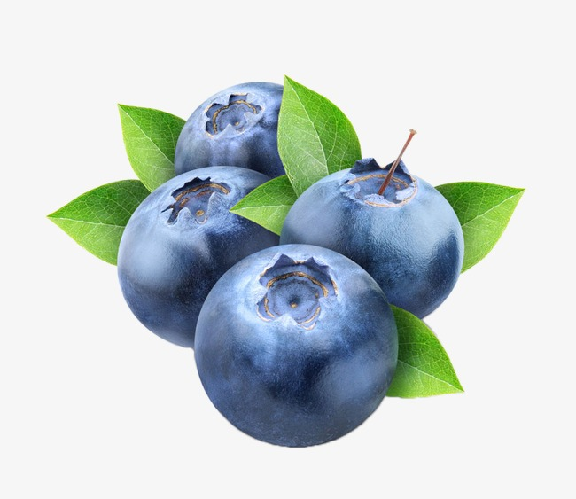 Delicate png image round. Blueberries clipart blueberry fruit