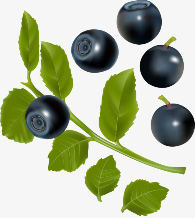 Blueberries clipart blueberry fruit. Hd png image and