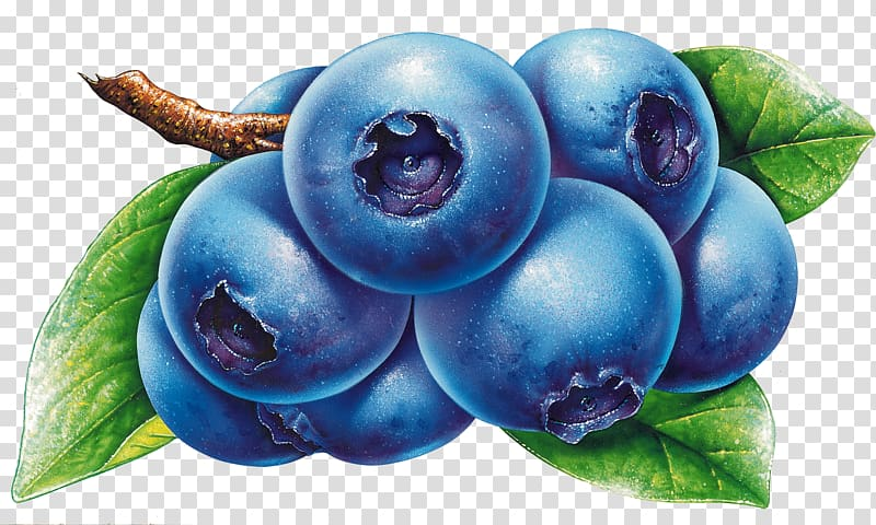 Transparent background png pngguru. Blueberries clipart blueberry fruit