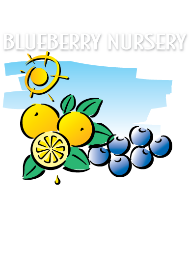 Home florida nursery. Blueberries clipart blueberry plant