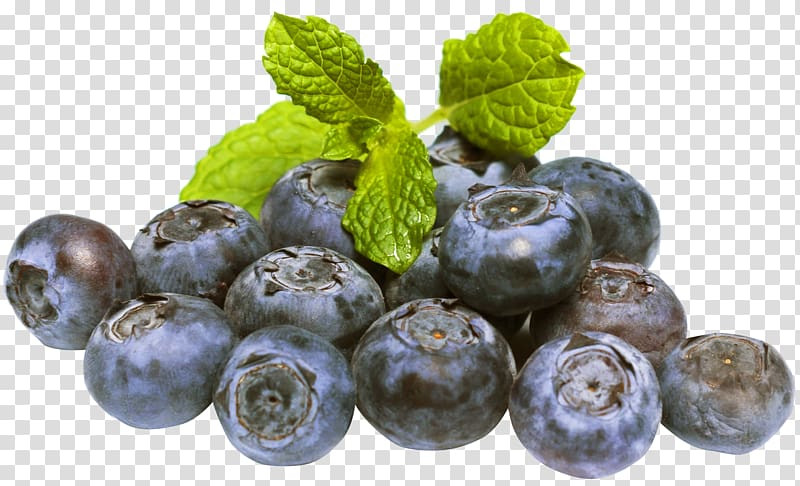 Blueberries clipart blueberry plant. Fruit transparent background png