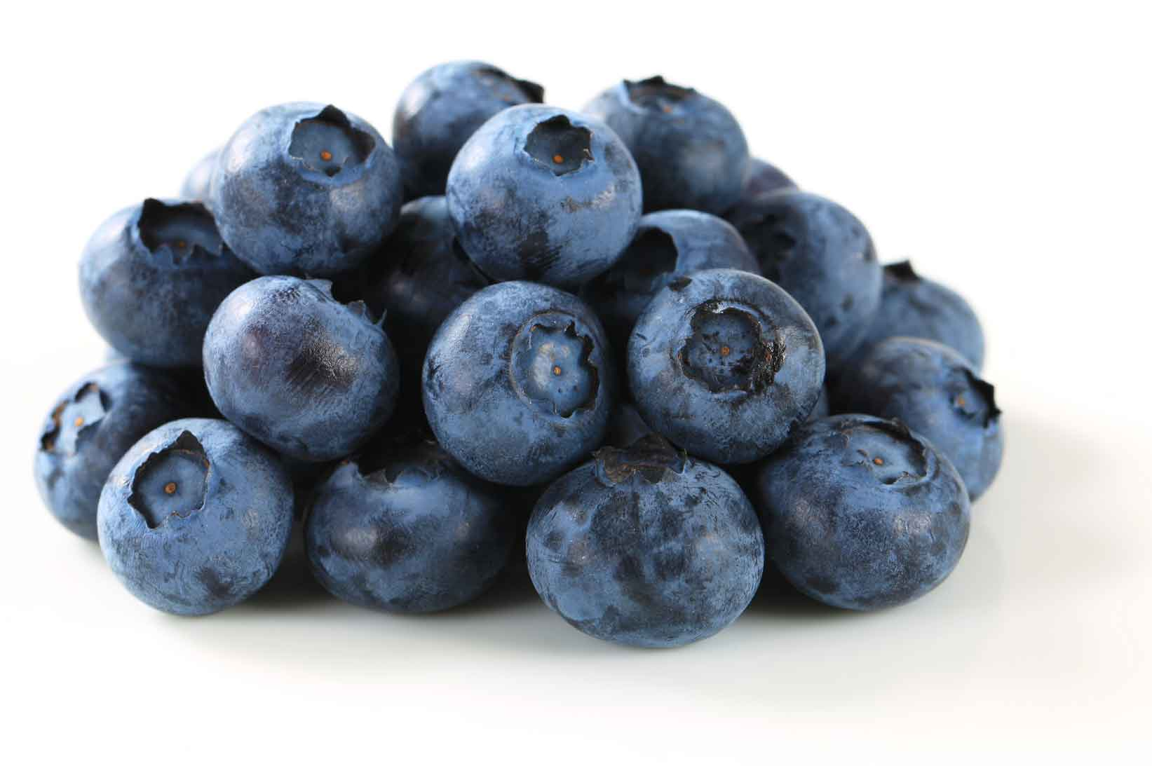 Blueberries clipart blueberry plant. For commercial growers genetics