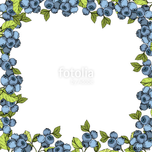 Vector blue and green. Blueberry clipart border
