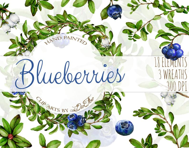 Watercolor blueberry clip art. Blueberries clipart branch