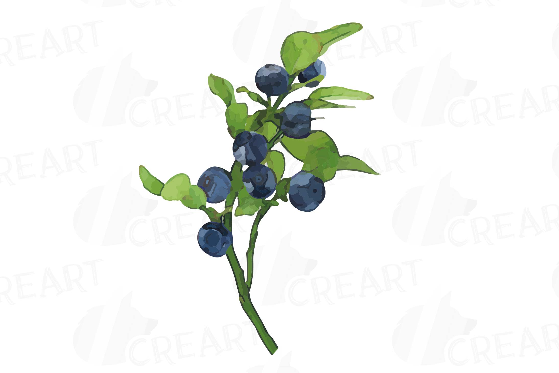 Blueberry clipart branch. Watercolor and leaves vector