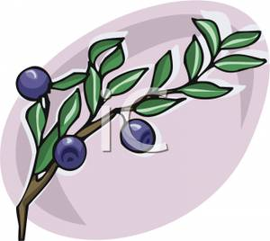 Growing on a royalty. Blueberries clipart branch