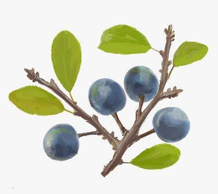 Blueberries clipart branch. Hand painted fruit tree