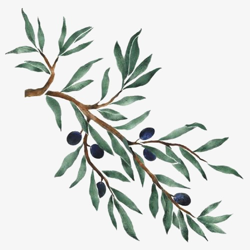 Blueberry tree hand painted. Blueberries clipart branch