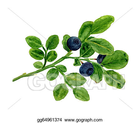 Blueberries clipart branch. Stock illustration a of