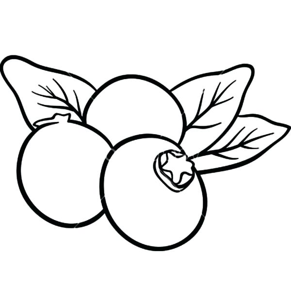 Blueberry bush drawing at. Blueberries clipart color