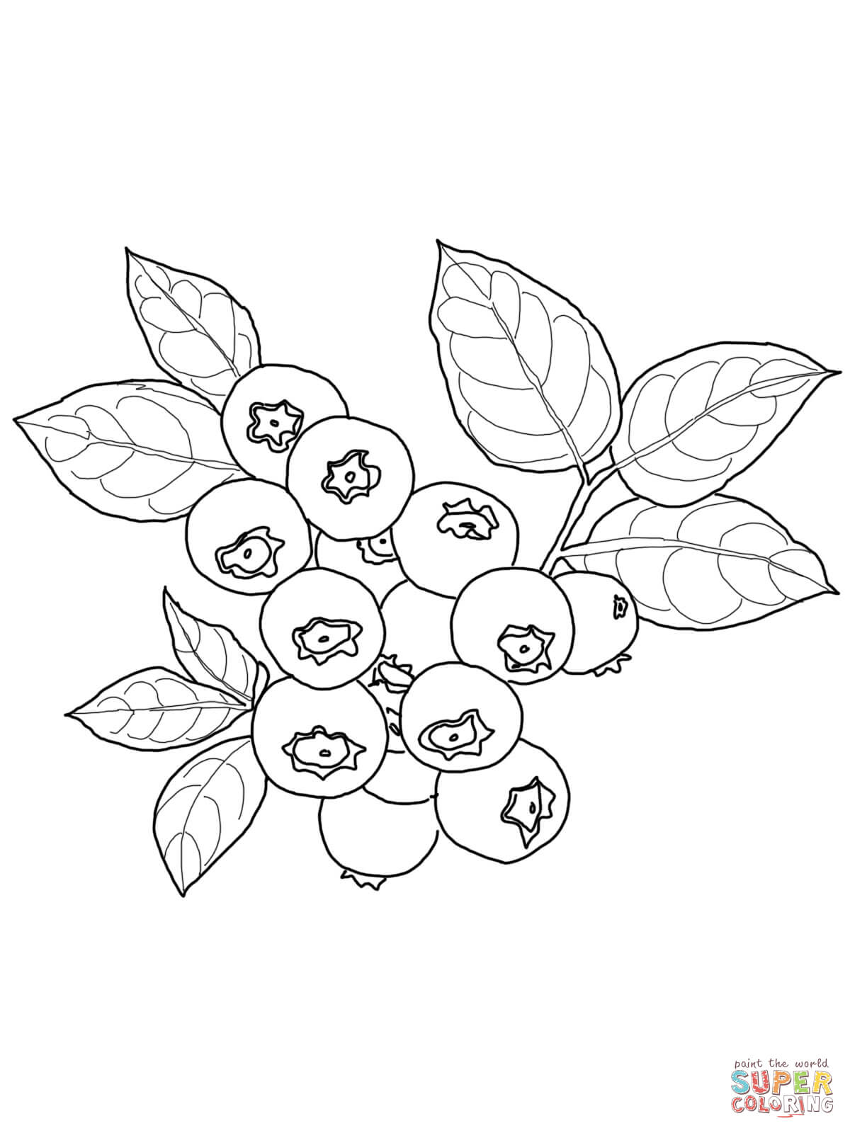 Blueberry coloring pages free. Blueberries clipart color