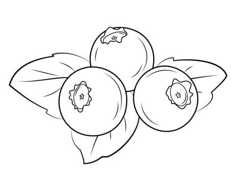 Blueberries clipart color. Coloring page from blueberry
