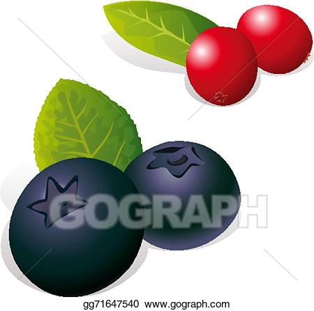 Vector art blueberry and. Blueberries clipart cranberry