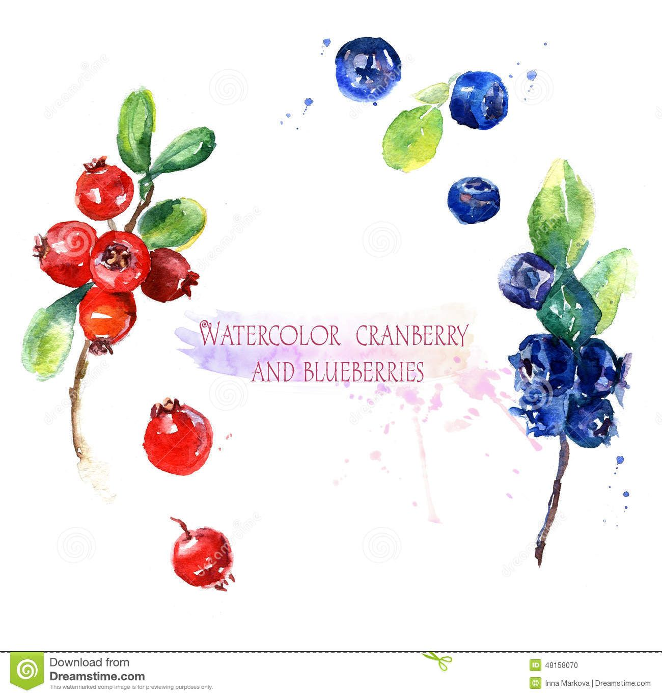 Watercolor illustration and blueberries. Blueberry clipart cranberry