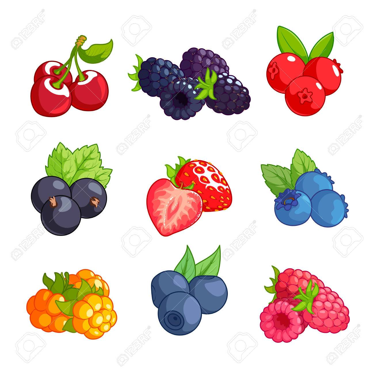 Blueberry set of different. Blueberries clipart cranberry