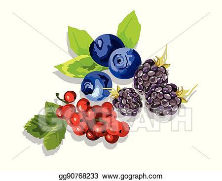 Vector stock blackberry blueberry. Blueberries clipart cranberry