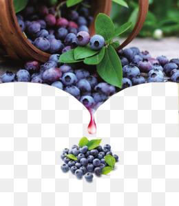 Blueberries clipart elderberry. Blackcurrant blueberry clip art