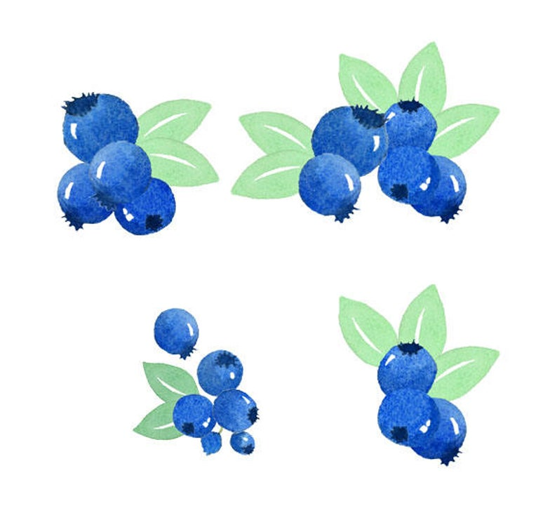 Blueberry clipart two. Watercolor blueberries set fruit
