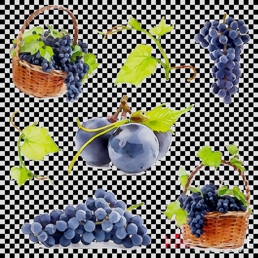 Flower leaves blueberry fruit. Blueberries clipart grape