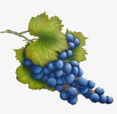 Blueberry fruit png image. Blueberries clipart grape