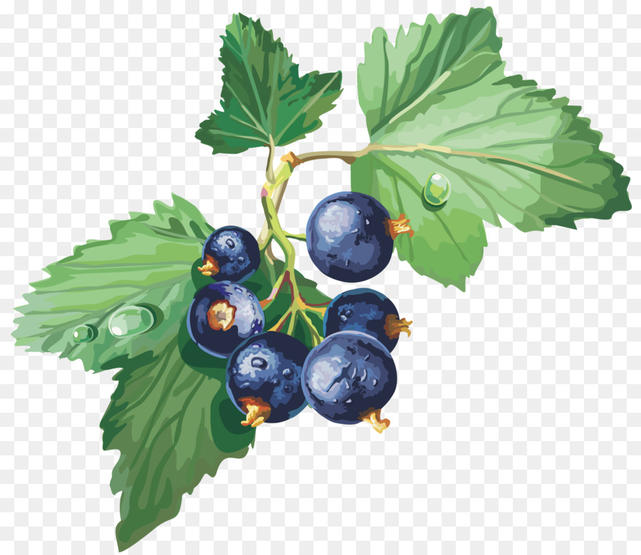 Blackcurrant gooseberry redcurrant jostaberry. Blueberries clipart grape
