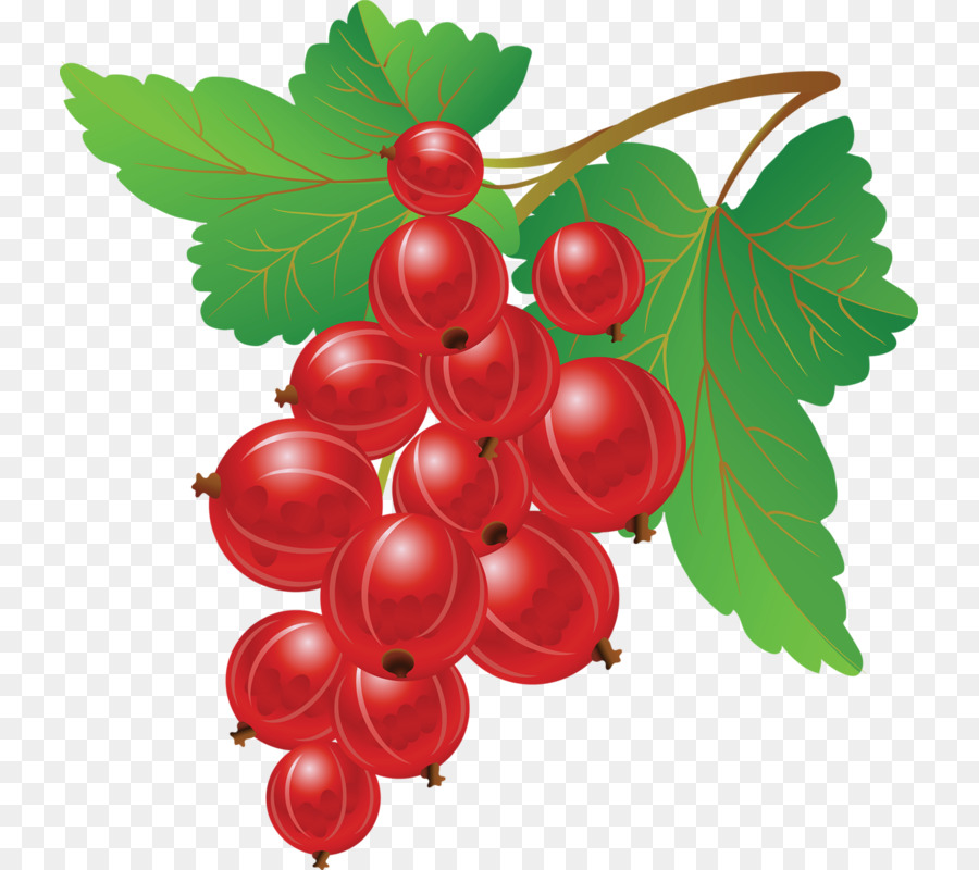 Blueberries clipart grape. Redcurrant blueberry fruit clip