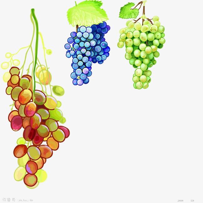 blueberries clipart grape