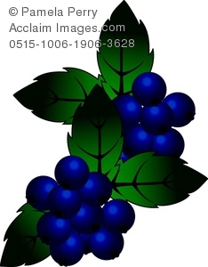 Clip art illustration of. Blueberries clipart grape
