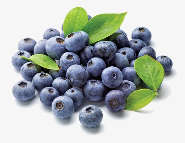 Blueberry fruit png image. Blueberries clipart huckleberry