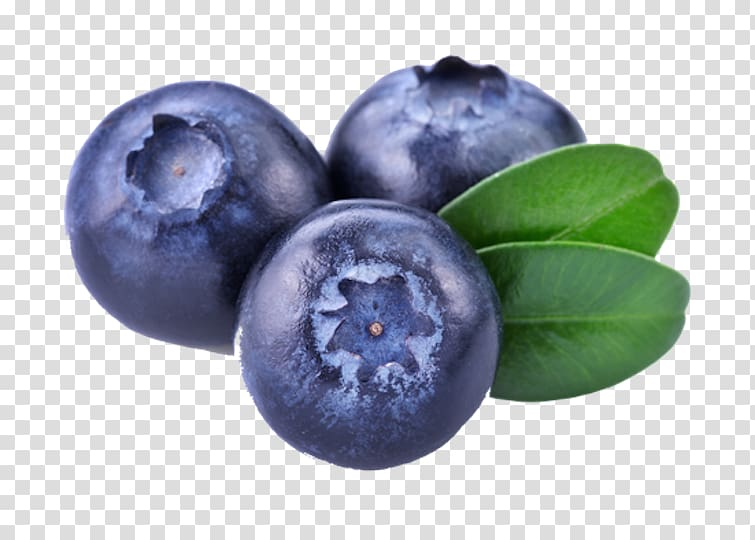Blueberries clipart huckleberry. Juice european blueberry bilberry