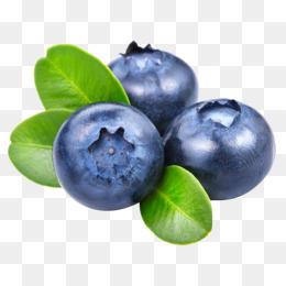 Berries png vectors psd. Blueberry clipart juniper berry