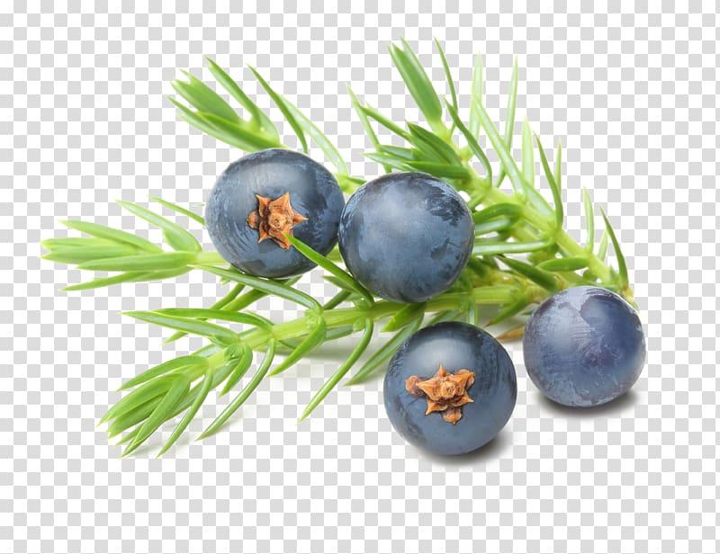 Blueberries clipart juniper berry. Four black fruits gin