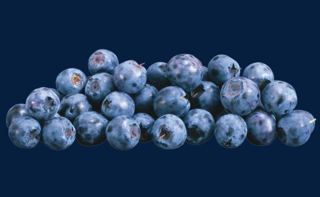 A bunch of blueberries. Blueberry clipart juniper berry