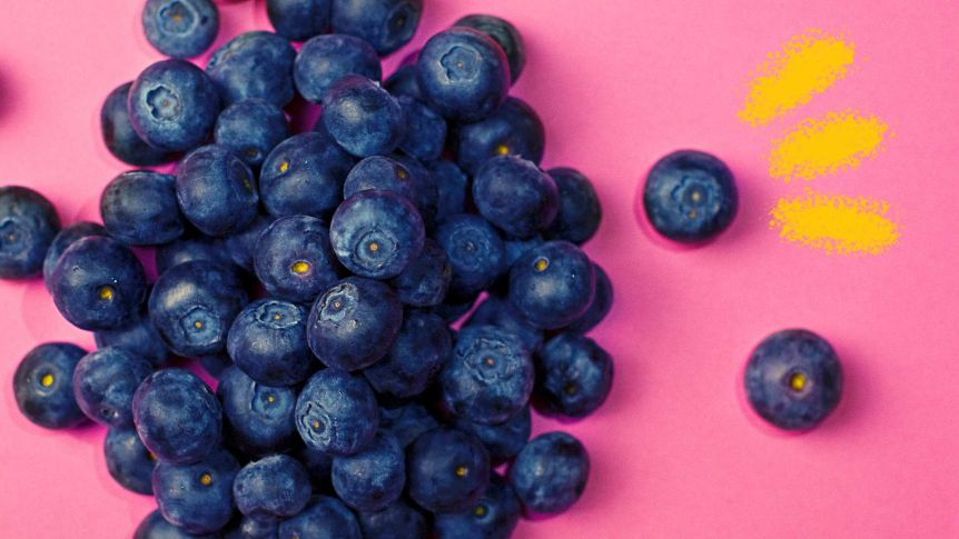 The superfood that lives. Blueberries clipart one blueberry