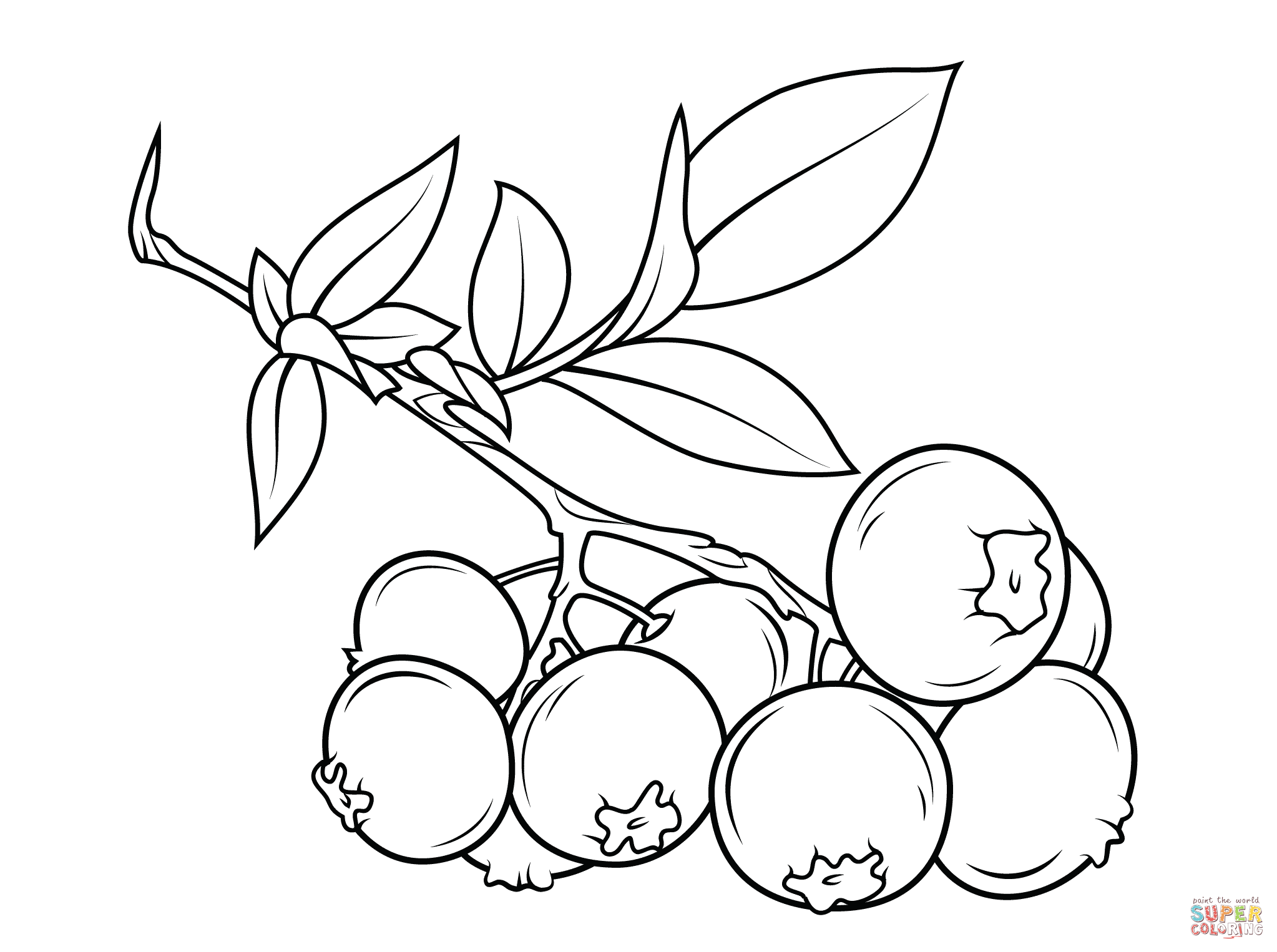 Blueberries clipart outline. Blueberry branch super coloring