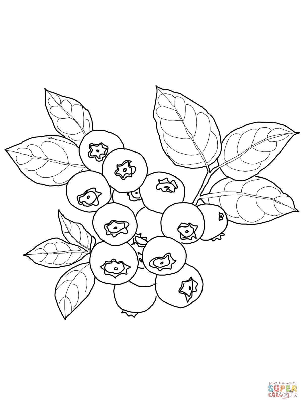 Blueberry coloring page supercoloring. Blueberries clipart outline