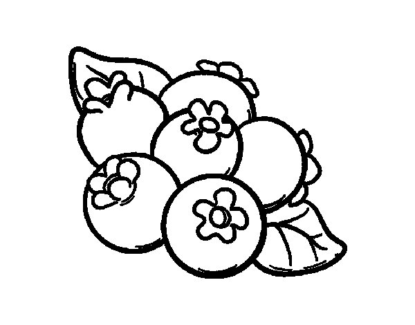 Blueberries clipart outline. Blueberry coloring page emma