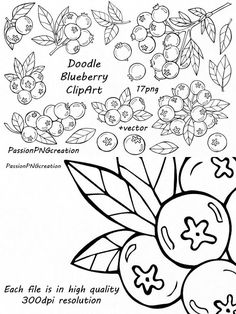 Blueberries clipart outline. Super coloring art pages