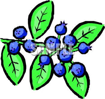 Panda free images blueberryclipart. Blueberry clipart branch