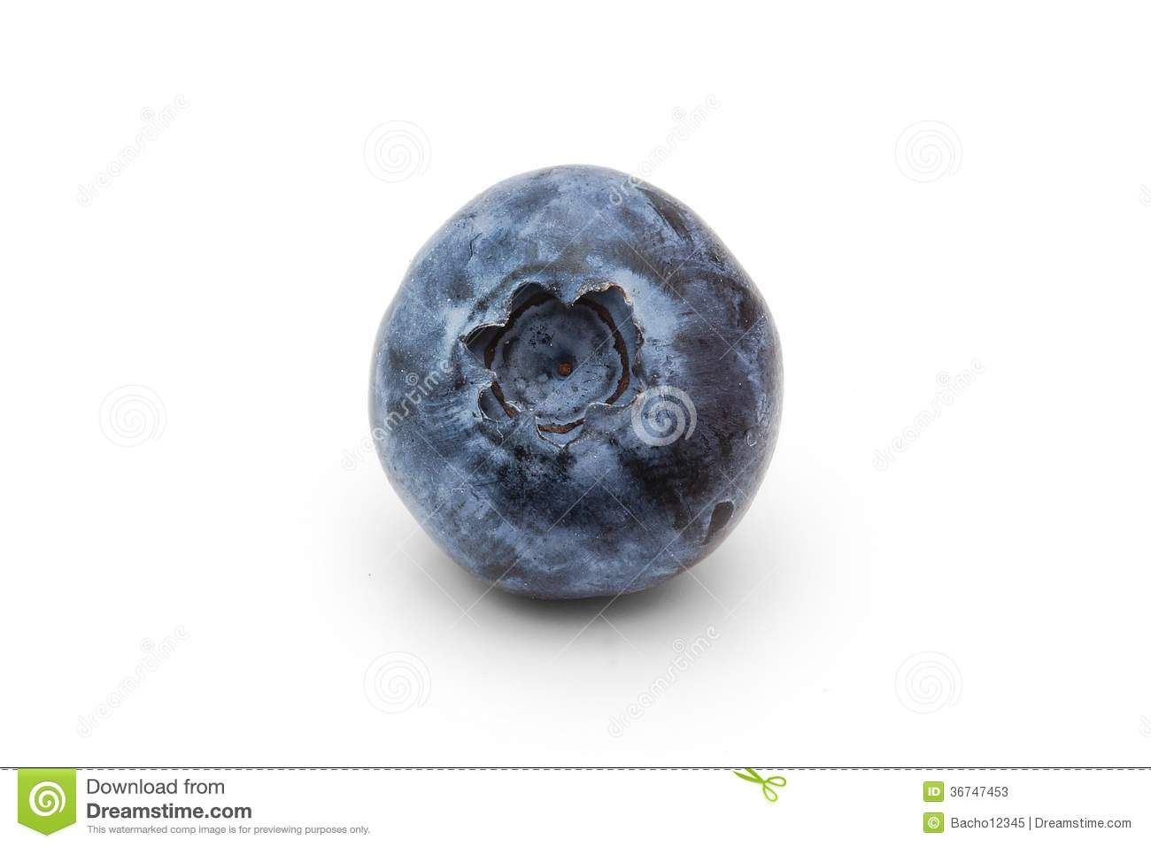 Blueberry google search food. Blueberries clipart single