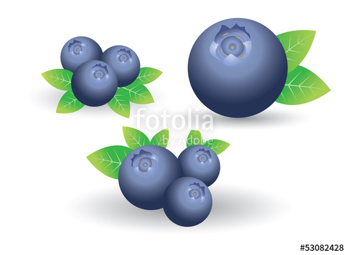 Blueberry clipart single. Vector stock image and