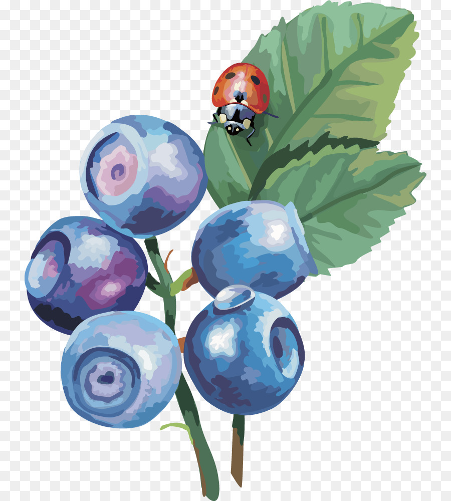 Drawing at getdrawings com. Blueberry clipart sketch