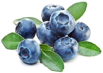 Png images free download. Blueberries clipart transparent background