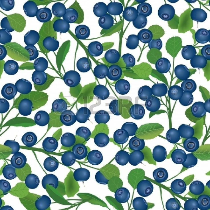 best bl b. Blueberry clipart blueberry bush