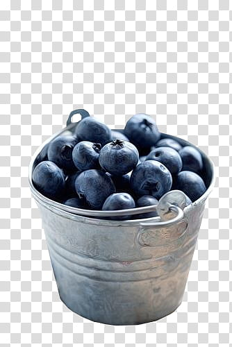 In stainless steel bucket. Blueberries clipart two