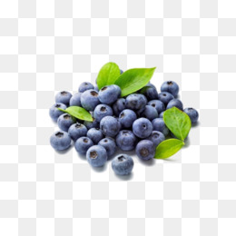 Blueberries clipart vector. Chile imported png vectors