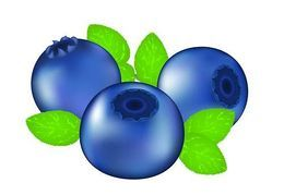 Blueberry clipart color. Vector graphics eps clip